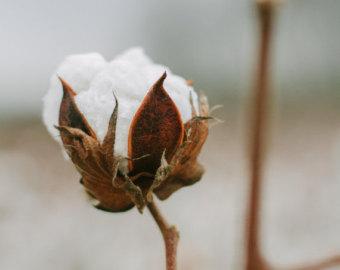 cotton bud